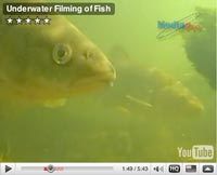 Interesting underwater video images of fish