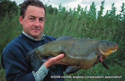 Martin Burgess with an 11 lbs 5 oz tench, the biggest from Bawburgh Lakes to date