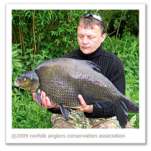 Jim Bigden with a 17 lbs 5 oz bream from Colney Lake