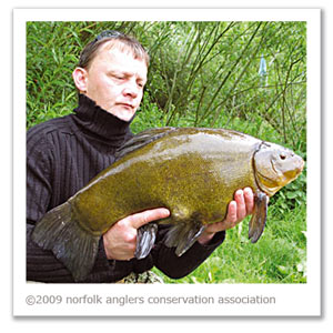 An outstanding 10 lbs 5 oz male tench for Jim Bigden.